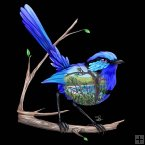 LED Canvas - Blue Wren
